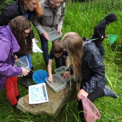 Pond dipping 19 Looking