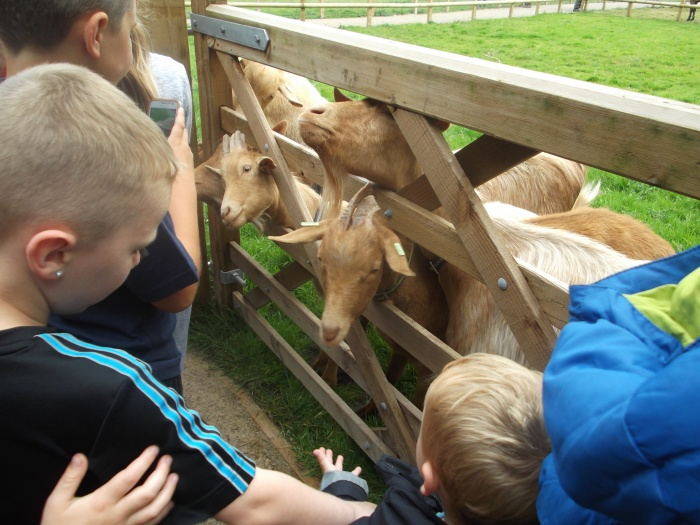 Reaseheath visit, feeding goats.
